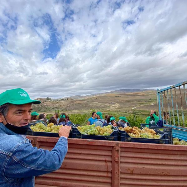 A Verbumcaudo è tempo di vendemmia:  sabato la raccolta di comunità