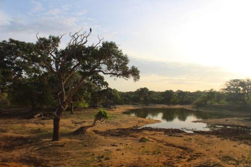 Sri lanka - paesaggio nello Yala