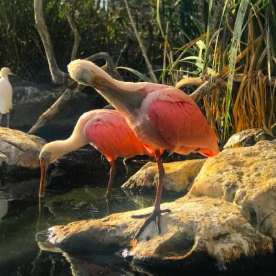 Uccelli al Bioparc
