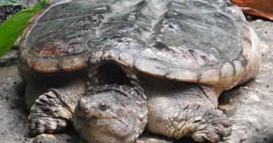 Tartarughe pericolose
