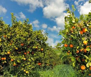 Risorse agricole (foto internet)
