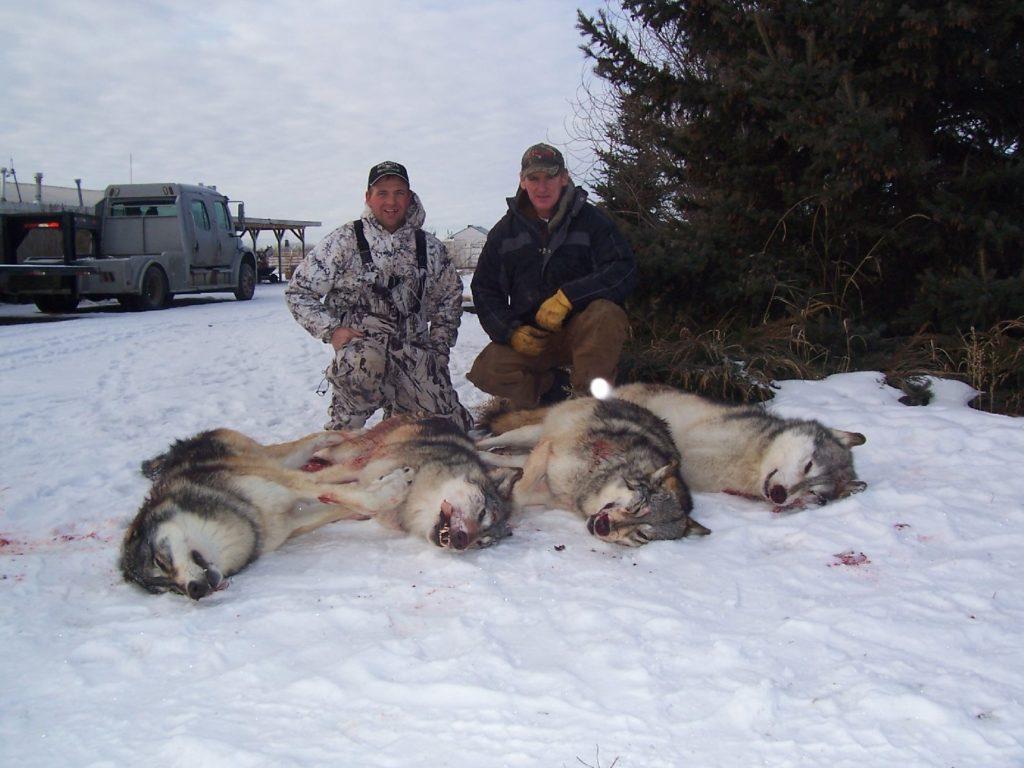 Risultati immagini per no allo sterminio dei lupi