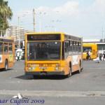 L309_R2garibaldi