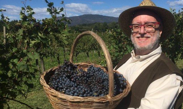 Melaverde: Anticipazioni, la produzione dei vini friulani | 5 novembre