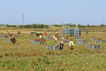 Allarme agricoltura, per Copagri a rischio l'80% delle attività abruzzesi