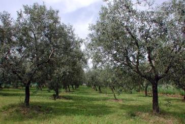 Xylella Fastidiosa e rischi per l'Abruzzo: se ne parlerà in un convegno a Vasto