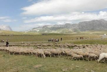 Aiuti Pac legati ai terreni di pascolo solo a chi detiene capi di bestiame e codice Asl