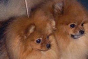 Scavalcano il recinto e rubano due cani