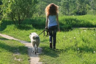 Celenza sul Trigno, pericolo di cibo avvelenato per i cani