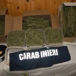 Droga: 240 chili di marijuana, foto generica di droga, con scritta carabinieri e paletta d'ordinanza