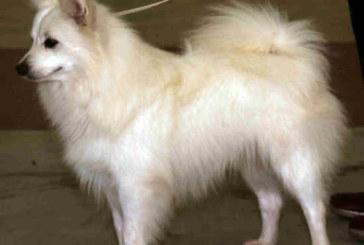 Montesilvano: cane preso a calci e testate, il Giudice denuncia un giovane