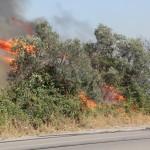 incendio-statale 16-2