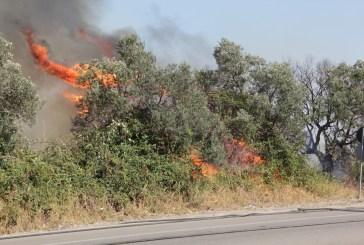 Incendio ai bordi della Statale 16