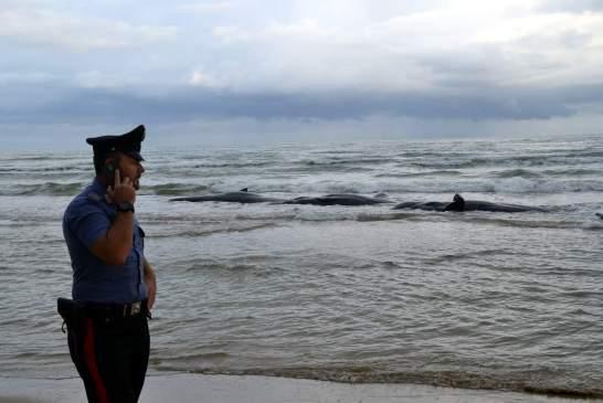 capodogli spiaggiati-punta penna - 005