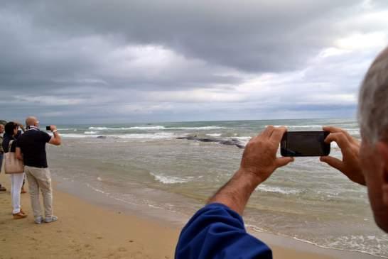 capodogli spiaggiati-punta penna - 043