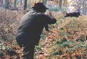 Selecontrollo dei cinghiali, i cacciatori annunciano lo sciopero e scatenano la rabbia delle organizzazioni professionali
