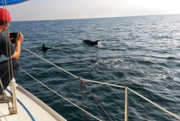 In vela con noi, una bella realtà di sport e amore per il mare