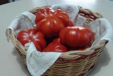 Oggi convegno sul pomodoro tipico vastese