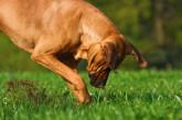 Corso formativo per i proprietari di animali d'affezione
