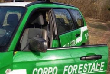 Taglio abusivo di legna, individuato il responsabile