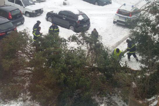 neve albero caduto
