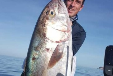 Pescata una ricciola da 30 Kg