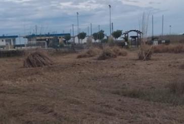 Vasto, devastata la vegetazione dell'area protetta
