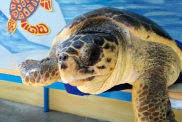Oggi quattro tartarughe torneranno in mare