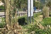 Stop agli alberi abbattuti, ora a Vasto c'è il regolamento del verde