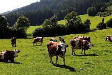 Caldo, con gli animali sotto stress calano le produzioni e aumentano i costi