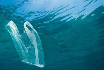 Il circolo nautico va in mare per raccogliere la plastica