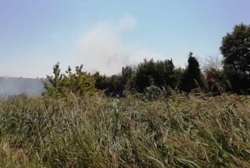 San Salvo, incendio a Bosco Motticce