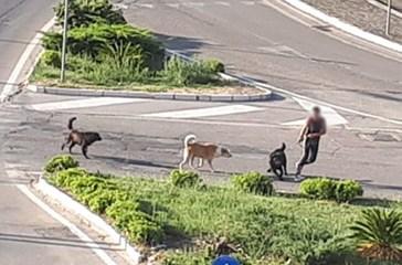 Porta a spasso il cane, ma viene aggredita e inseguita dai cani della rotonda di Sant'Onofrio