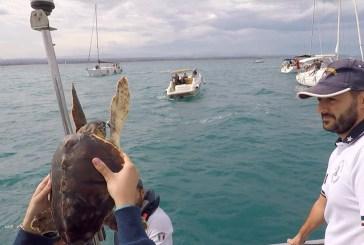 Due tartarughe tornano in mare