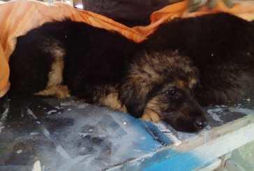 Santulli sull'azzeramento dei fondi per la sterilizzazione dei cani: