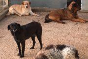 Maltrattamento cani (6)