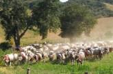 Transumanza, settimana clou per il riconoscimento dell'Unesco. In lizza anche 2 comuni dell'Abruzzo