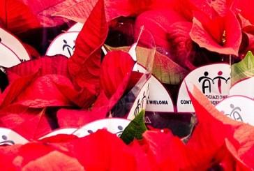 La 31° edizione delle Stelle di Natale dell'AIL