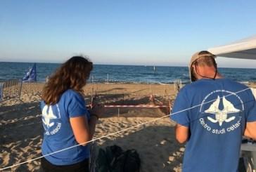 Trovato delfino morto sulla spiaggia di Campomarino