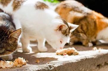 Laudazi sul contrasto al randagismo felino: