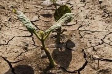 Crisi idrica, l'agricoltura è in ginocchio