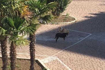 Cani randagi sulla Circonvallazione Histoniense, commercianti e residenti in rivolta