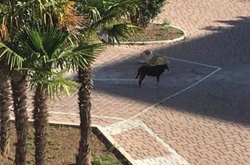 Cani randagi sulla circonvallazione Istoniense, i residenti tornano a chiedere interventi immediati
