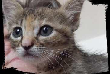 A Vasto una raccolta firme per il rifugio dei gatti
