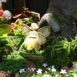Fairy gardens enchant me.
