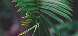 plant-nursery-20