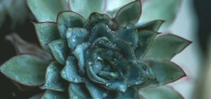 plant-nursery-21