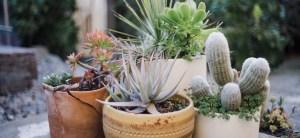 plant-nursery-33