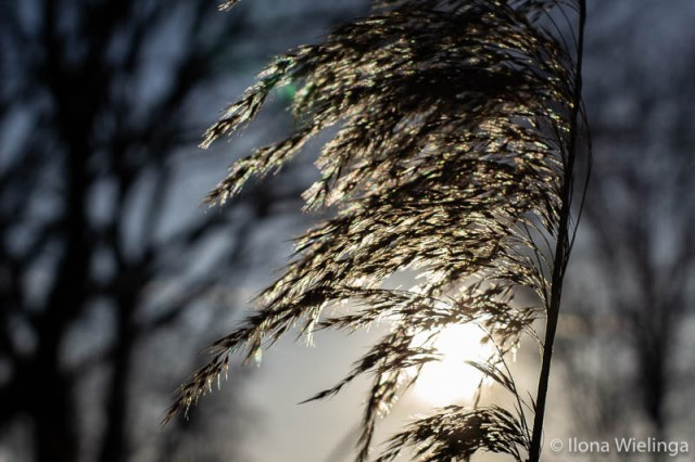koud 2 fotografie winter winterzon