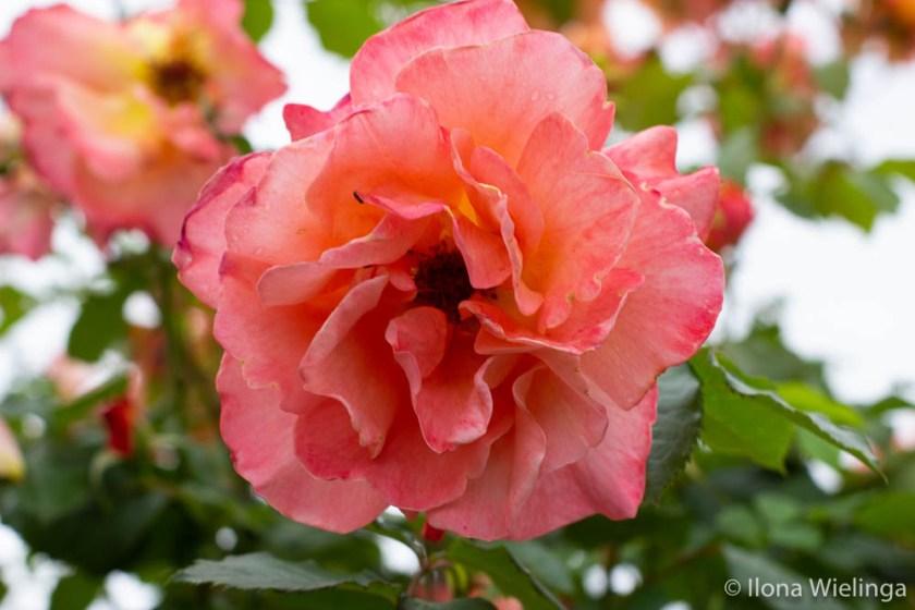 grenzen 3 macro bloemen